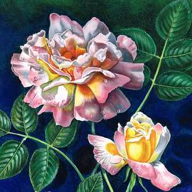 Val Stokes - My favourite rose