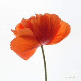 Linda Troski - Orange Poppy