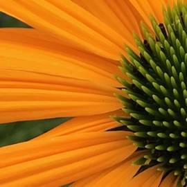 Bruce Bley - Orange Surprise