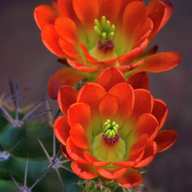 Saija Lehtonen - Orange Ya Beautiful