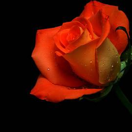 Orangette by Doug Norkum