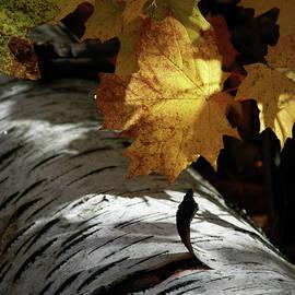 Peeling Birch Bark by Kathy Carlson