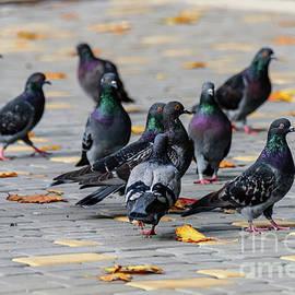 Pigeons by Viktor Birkus