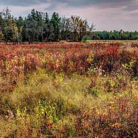 Geraldine Scull - Pine barrens of New Jersey