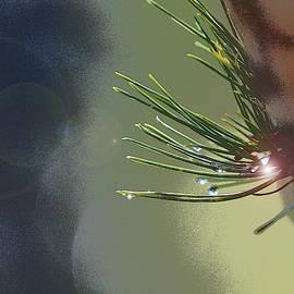 Linda Brody - 1 Pine Needles Abstract