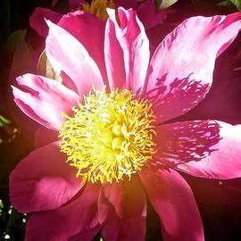 Pink Flower by Stephanie Moore