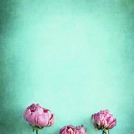 Pink Peonies  by Stephanie Frey