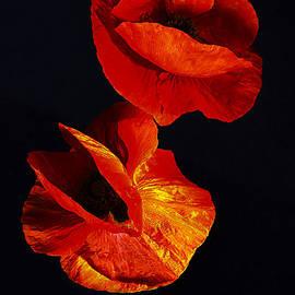 Alexander Vinogradov - Poppies #2.