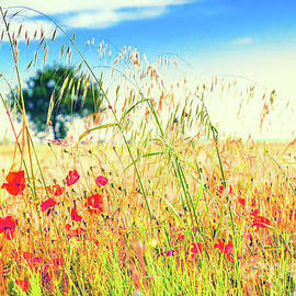 Poppies With Tree In The Distance by Silvia Ganora