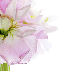 Pretty in Pink - Rebecca Cozart