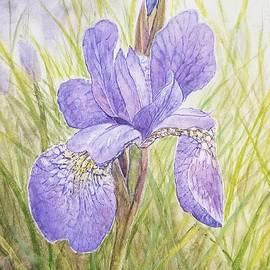 Purple Iris  by Jane Powell