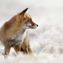 Roeselien Raimond - Red Fox, White World