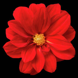 Johanna Hurmerinta - Red Summer Flower