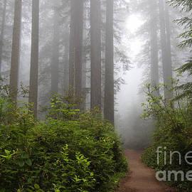 Redwood Grove by Vincent Bonafede