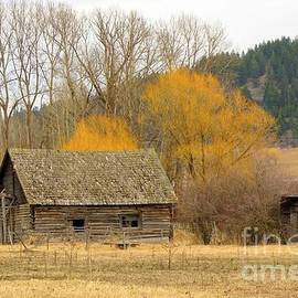 Rustic past by Frank Townsley