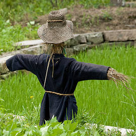 Scarecrow In A Rice Paddy In Wuzhen, China. by Rob Huntley