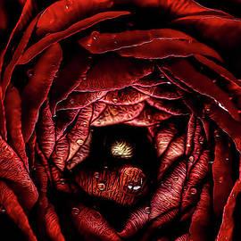 Darren Fisher - Scarlet Red