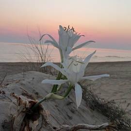 Rayne Van Sing - Summer Sea Lilies