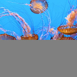 Sea Nettles Ballet 1 by Diane Wood