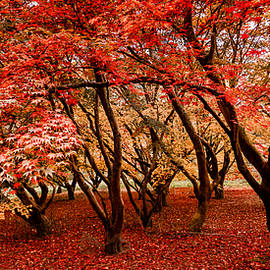Shades Of Autumn by Kelvin Trundle
