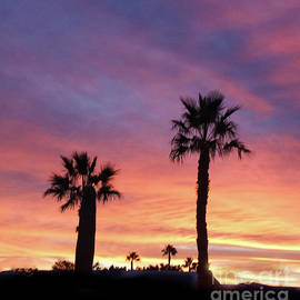 Robert Bales - Silhouetted Palm Trees