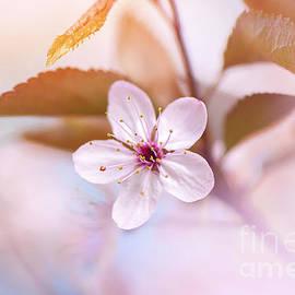 Simply Pink by Jacky Parker