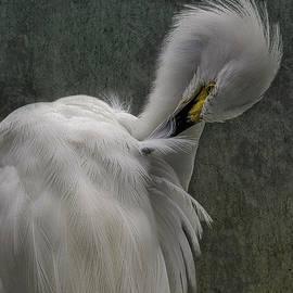 Snowy Egret Preening 2 by Ernie Echols
