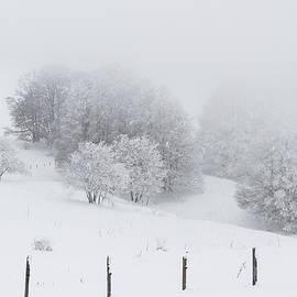 Paul MAURICE - Snowy trees