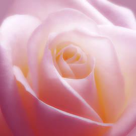 Soft Nostalgic Rose by Johanna Hurmerinta