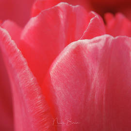 Nick Boren - Softly