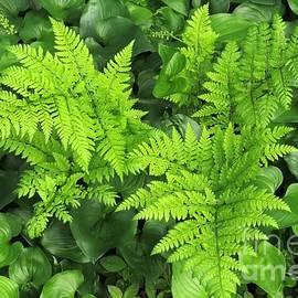 Frank Townsley - Spiny wood fern