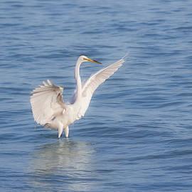 Spread Your Wings by Kim Hojnacki