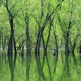 Lori Frisch - Spring Green Reflections