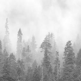 Stevens Pass Storm 6339 by Bob Neiman
