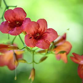 Nailia Schwarz - Summer Flowers