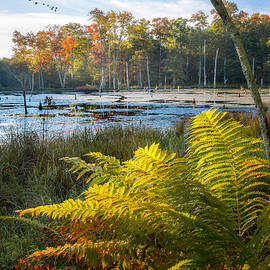 Sunrise in the Swamp by Bill Wakeley