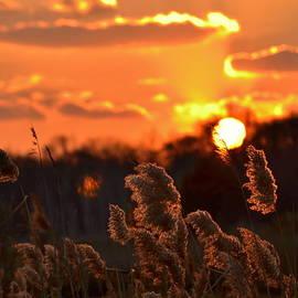Bob Cuthbert - Sunset through the Reeds -