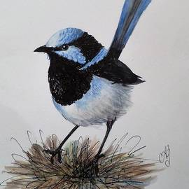Anne Gardner - Superb blue wren