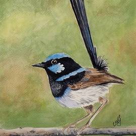 Anne Gardner - Superb fairy wren