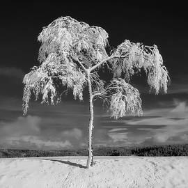 pixabay - surviving winter