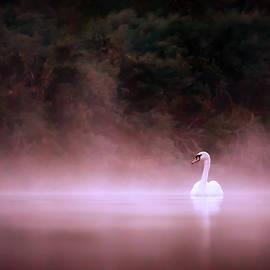 Roeselien Raimond - Swan in the Mist