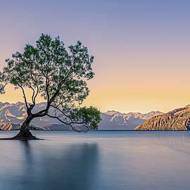 Darren Patterson - That Wanaka Tree