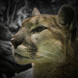 Ernie Echols - The Cougar