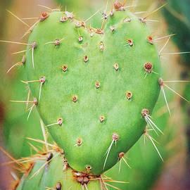Saija Lehtonen - The Heart of A Cactus