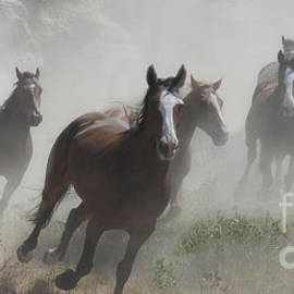 Off In A Cloud Of Dust by Bob Christopher