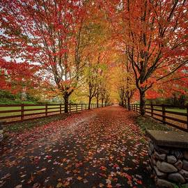 Tree Tunnel 14 by Mike Penney