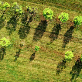 Trees And Shadows Aerial View by Matthias Hauser