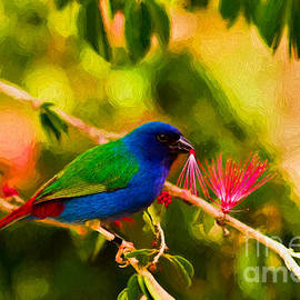 Tricolor parrot finch by Les Palenik