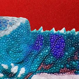 Turquoise Chameleon on Red