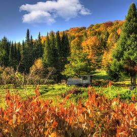 Joann Vitali - Vermont Fall Foliage